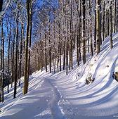 Smučanje po Trnovski planoti