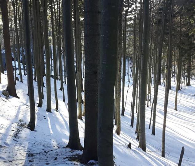 Trnovski gozd