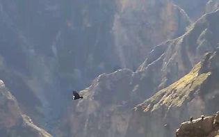 Potovanje v Peru, junij 2019 (kondorjev let)