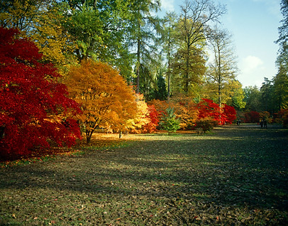 Westernbirt Arboretum