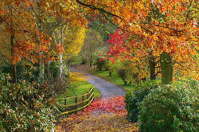 Bodenham Arboretum