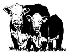 HerefordCowCalf1.jpg