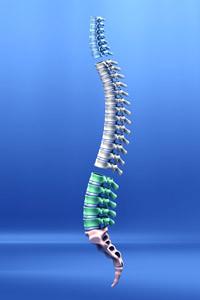 Understanding Spinal Anatomy
