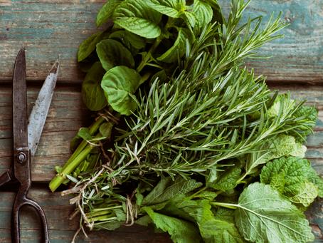 Herbes de Provence and Ratatouille
