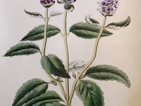 What is the language of Herbalism?