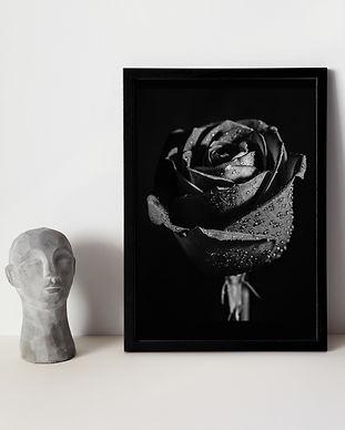Black Rose.jpg