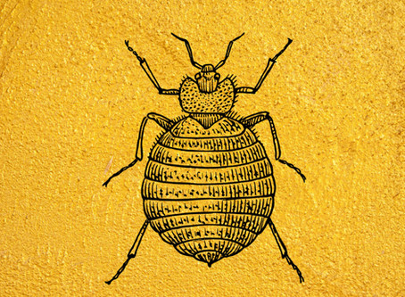 Do you think you may have bed bugs?