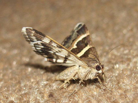 How to protect your clothes from moths?