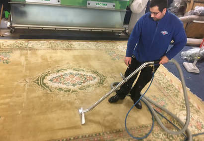 protima rug cleaning cambridge.PNG
