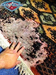 Carpet moth Cambridge Art of Clean