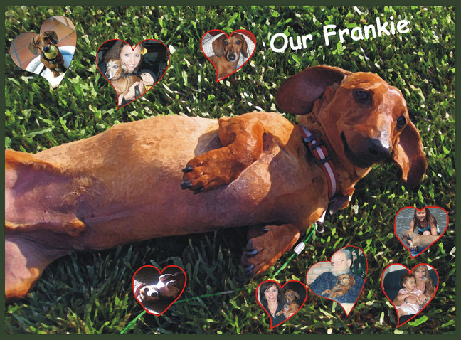 Paws Forever in our Hearts - A 1st Grader's Perspective   A Story from My Vet