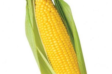 Organic Corn 250g