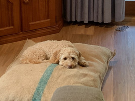 Medium Dog Bed