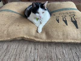 Medium Pet Bed