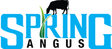 Official Spring Angus Logo.png