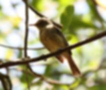 Ile_Aride_-_Oiseau_(39)_(cropped).jpg