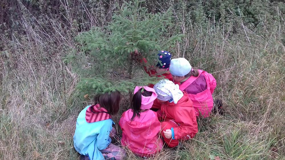 Sázíme strom - společně