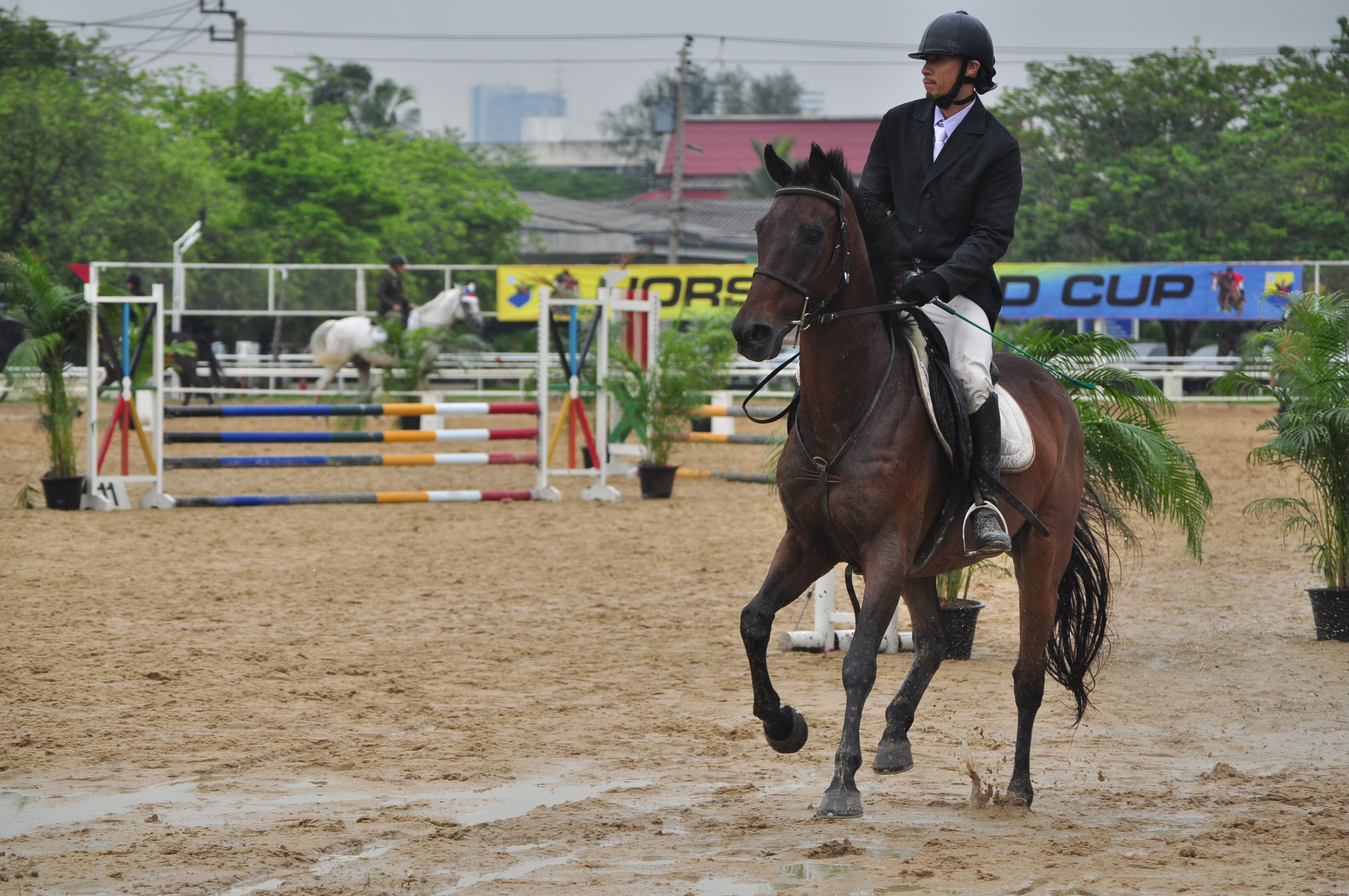 Horse Riding Show Jumping&Dressage
