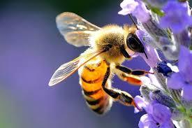 ape e polline