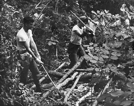 1967 - 1-31st Inf 7ID Clearing Trees nea