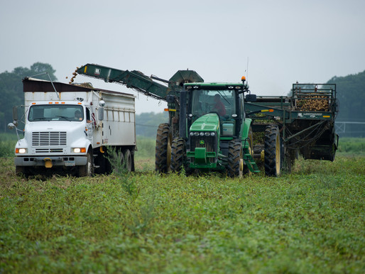 Crop Insurance Deadline Nears For Delaware and Maryland Potato Growers
