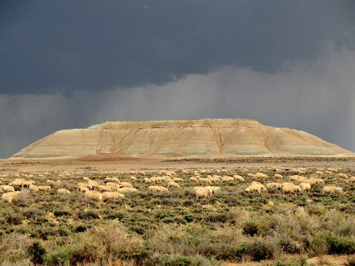 Wyoming's Resource Data Collection Statute Violates the First Amendment of the Constitution