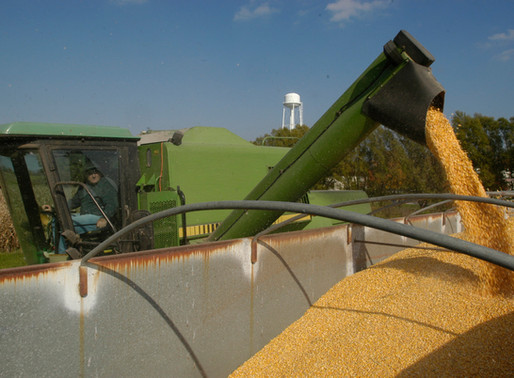 Corn Producers in Maryland and Delaware Have Till April 1 to Decide Stay or Opt Out of the Syngenta