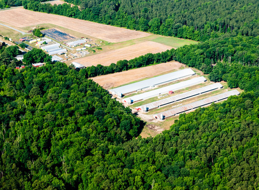 Challenge Brought Against Decision to Approve Loan Guarantee for Maryland Poultry Farm