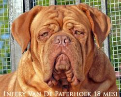 Infery Van De Paterhoek