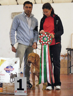 VII Raduno Italiano DDB