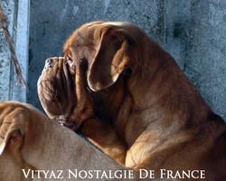 Vityaz Nostalgie De France