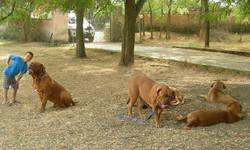 Gruppo Dogue de Bordeaux
