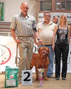 X Raduno Italiano Dogue De Bordeaux