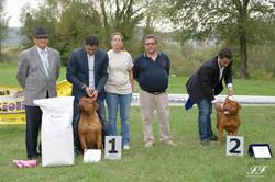 IX Raduno Italiano Dogue De Bordeaux