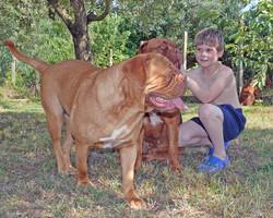 Matteo con Dogue de Bordeaux
