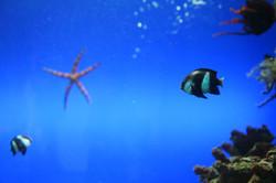 Zoo03-Mr fishy