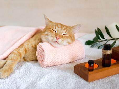 Dopřejte své kočce šťastný život