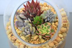Succulent Spheres30