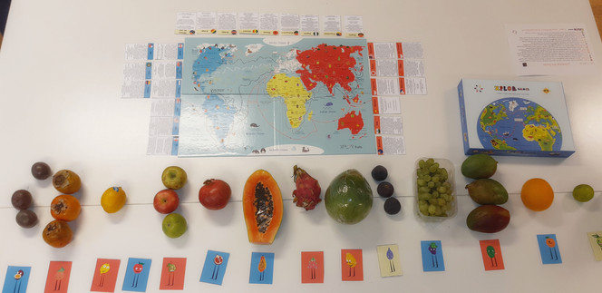 Everyting is in place to start the workshop ( 15 fruits to taste )