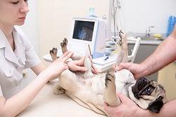 exame-clinica-veterinaria-porto-alegre-2
