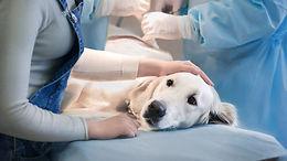 internacao-clinica-veterinaria-24h-porto