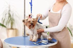 tosa-clinica-veterinaria-pet-shop-porto-