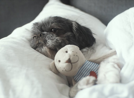 Pet em apartamento