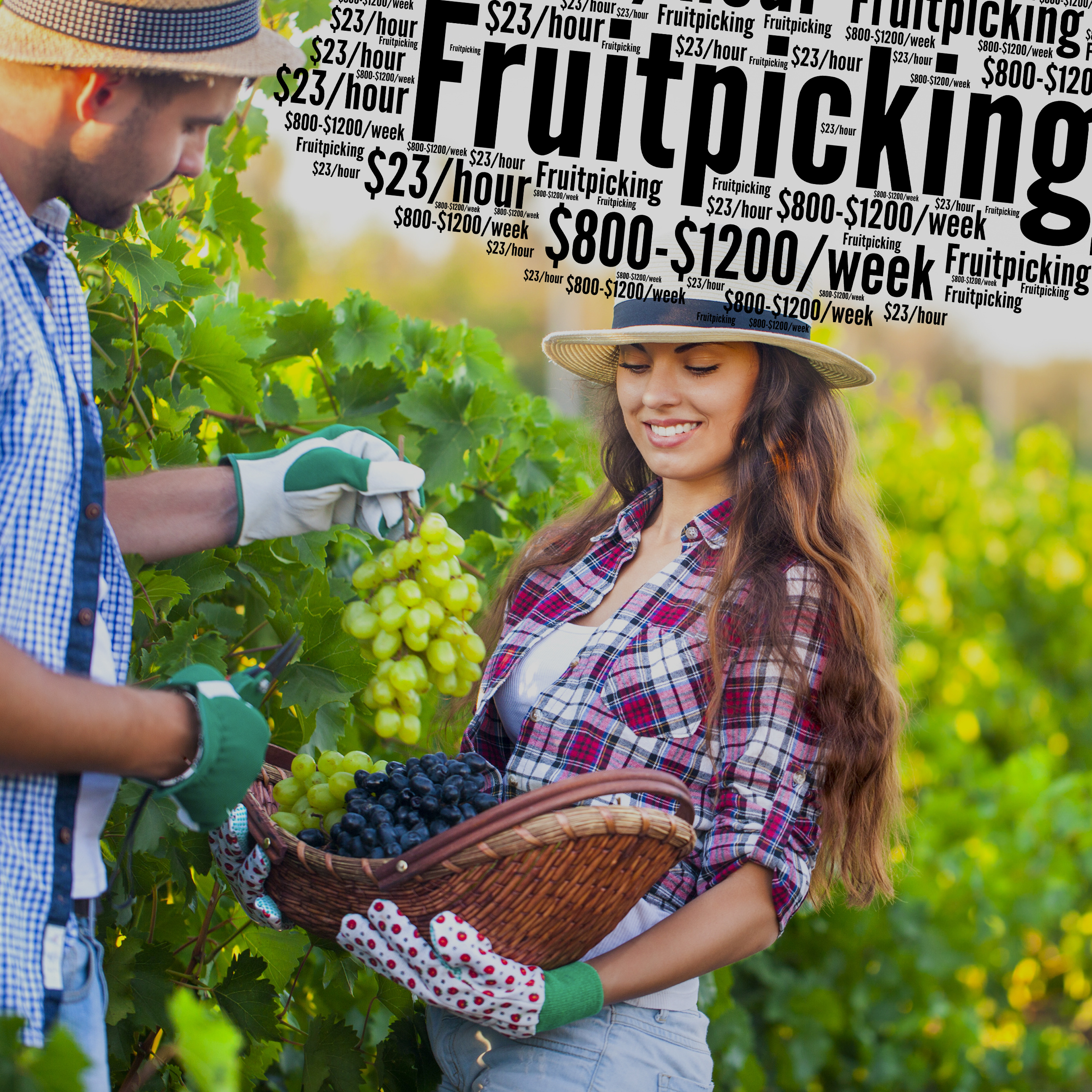 fruitpicking