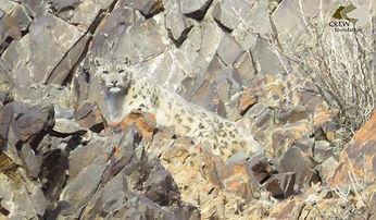 leopardo logo.jpg