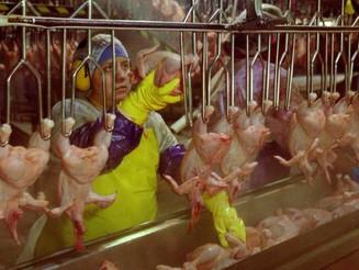 EUA: Trabalhadores dos aviários obrigados a usar fraldas