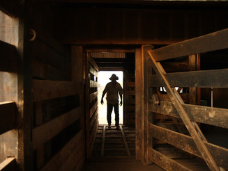 Decreto sobre trabalho escravo no Brasil pode levar a 'retrocessos lamentáveis', diz OIT