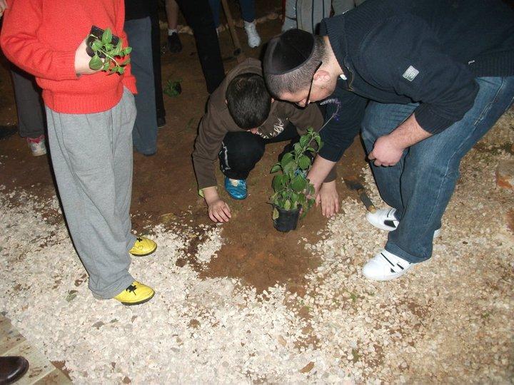 טו בשבט ינואר 2011 (11)