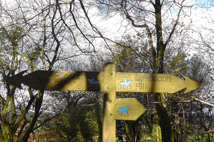 Bridleway Sign leading to Lewesdon Hill