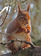 Lunch Time – Brownsea Island